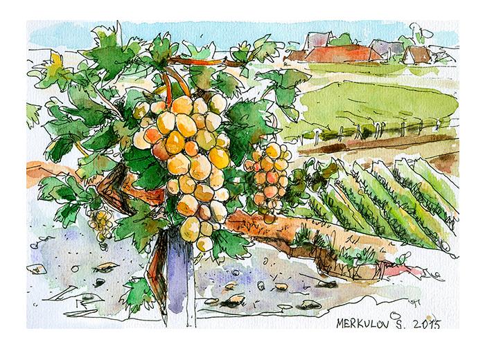 виноград, крым, виноградник, акварель, Севастополь