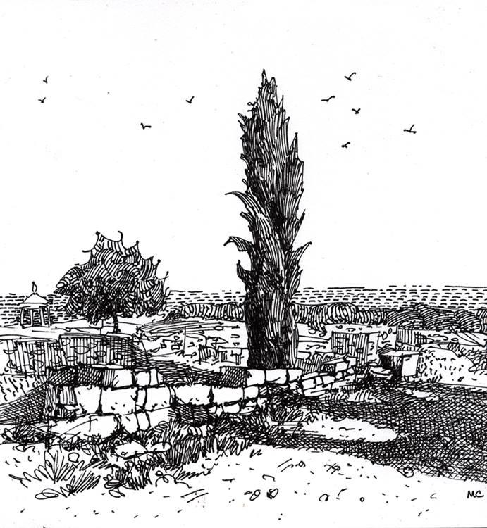 Срубленный кипарис в Херсонесе